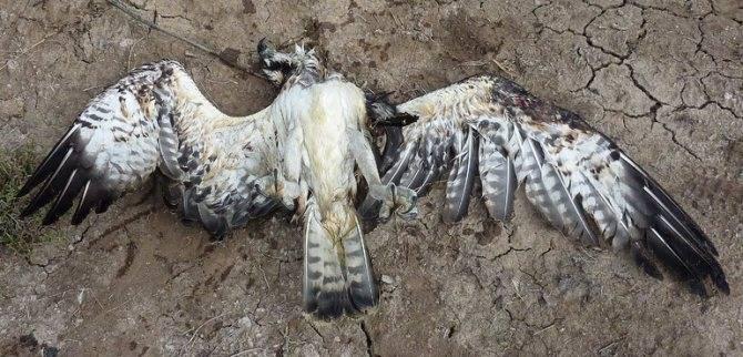 Птицы мертвая и живые