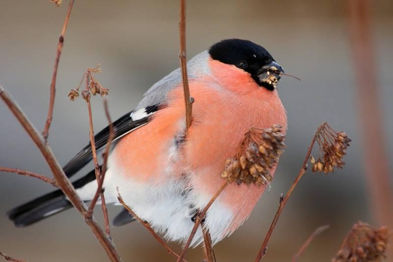 Что пташка на хвосте принесла? любопытные народные приметы про птиц