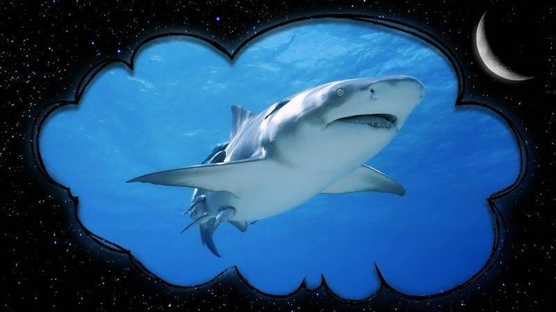 К чему снится акула, толкование сна по соннику