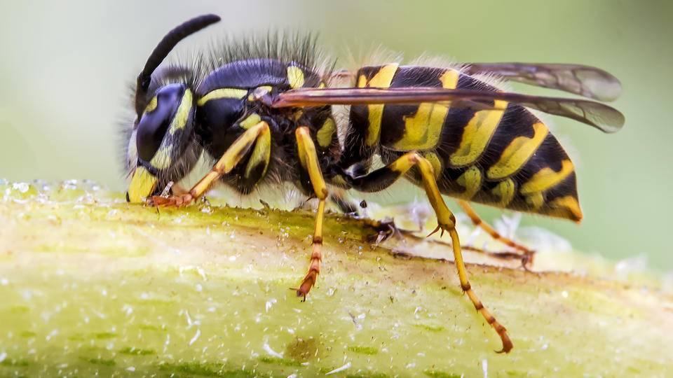 К чему снится укус осы