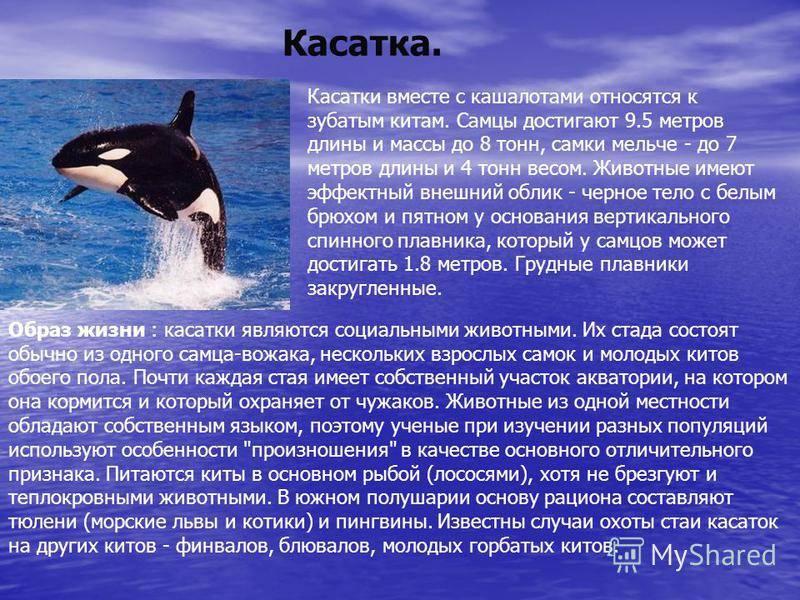 К чему снится кит в море женщине