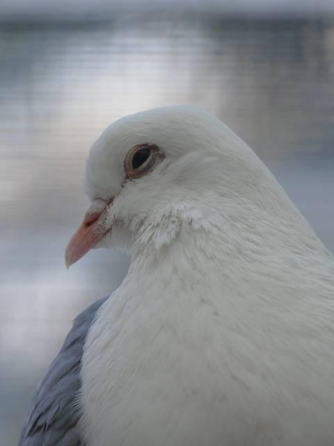 Сонник: белый голубь к чему снится белый голубь во сне приснился