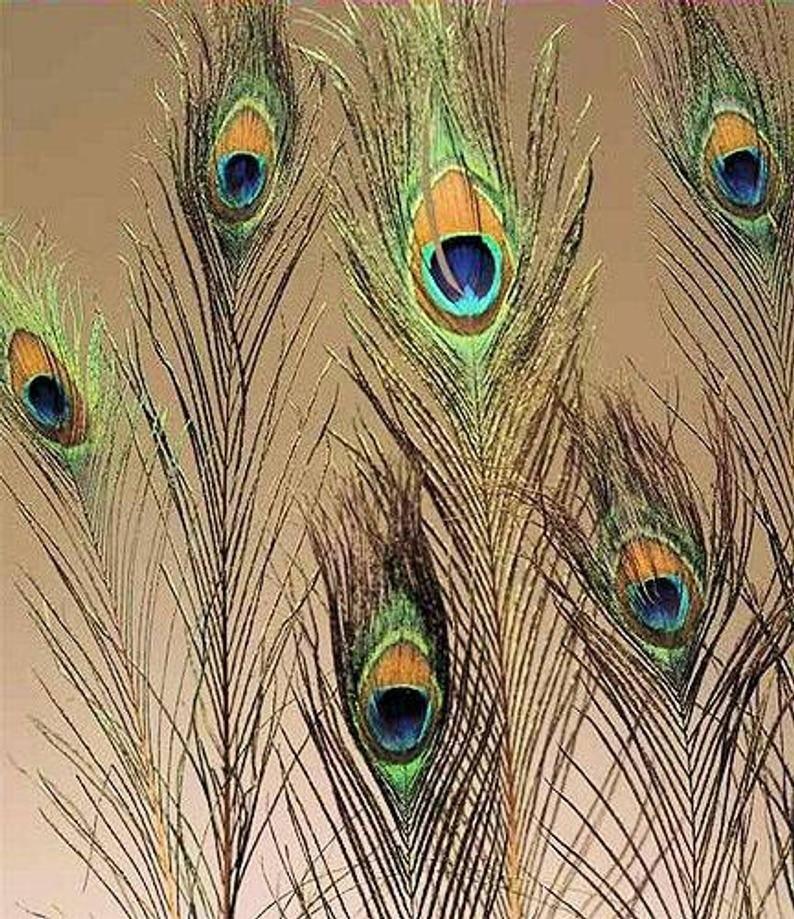 Павлиньи перья в доме