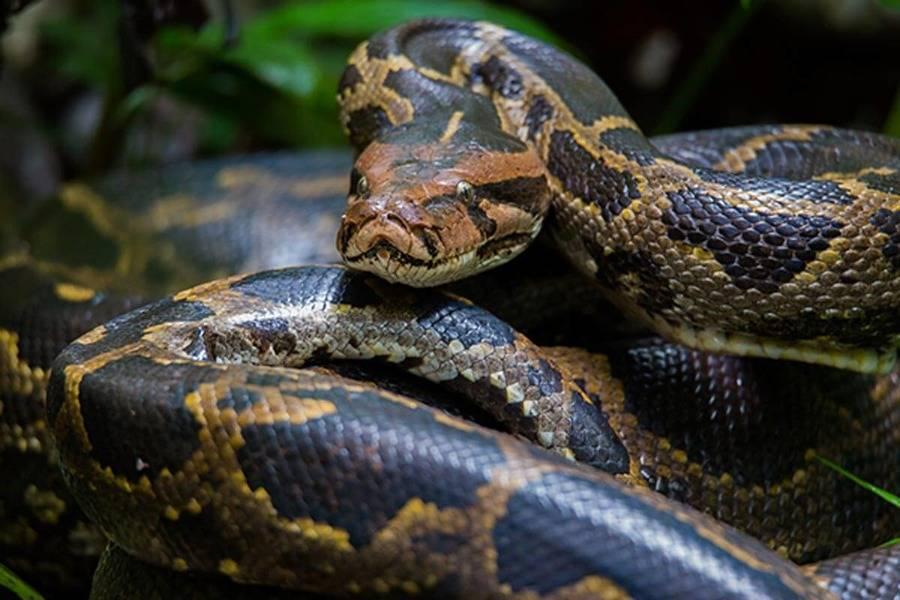 К чему снится большая змея по соннику? видеть во сне большую змею – толкование снов.