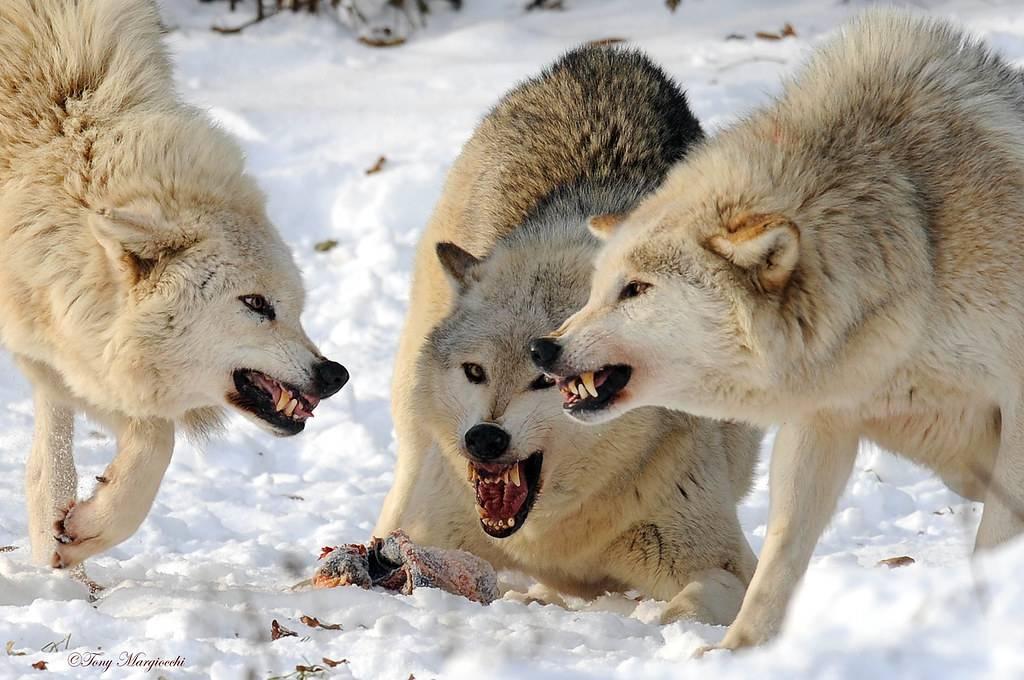 Сонник нападает стая собак. к чему снится нападает стая собак видеть во сне - сонник дома солнца