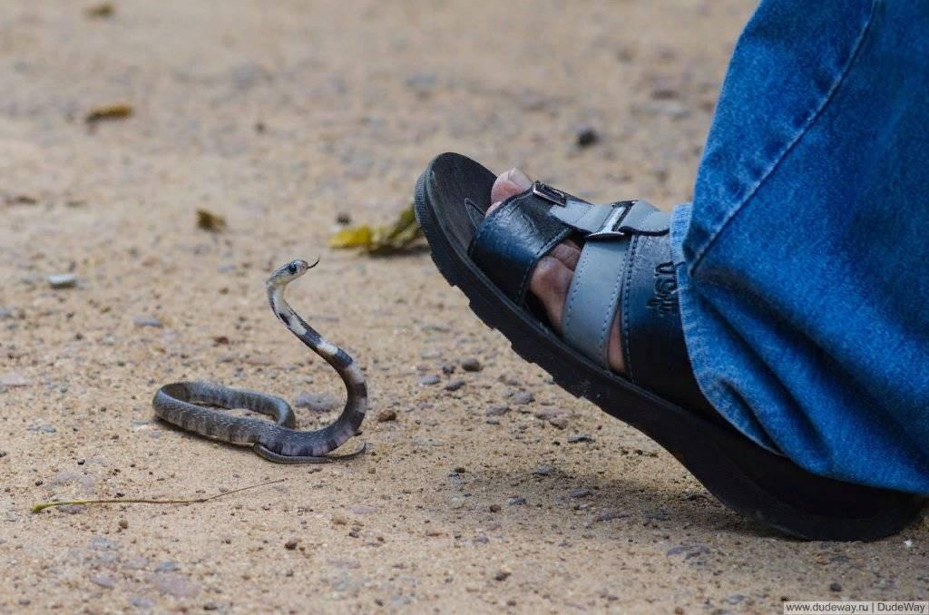 Укусила два раза змея