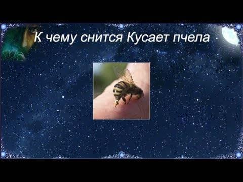 К чему снится укус осы, толкование сна по соннику