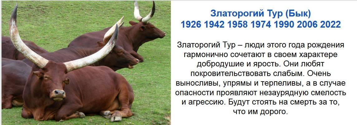 Люди, рожденные в год быка: характер, гороскоп, знаменитости