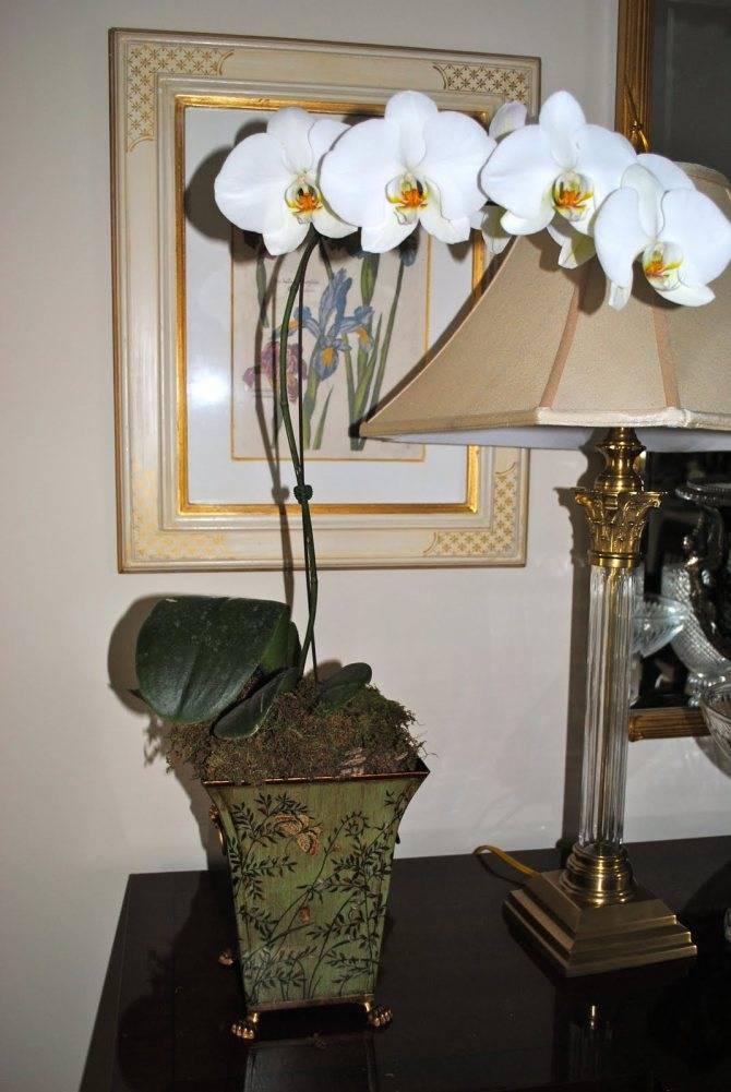 Орхидея дома: можно держать в квартире или нельзя, где ставить, каково влияние на человека и какие есть поверья?