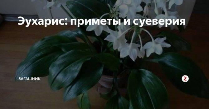 Кактусы: выбираем по цветам