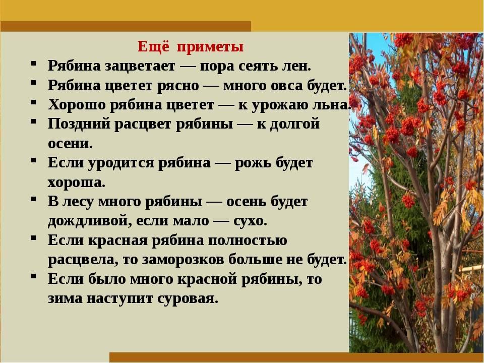 Народные приметы на урожай на любое время года