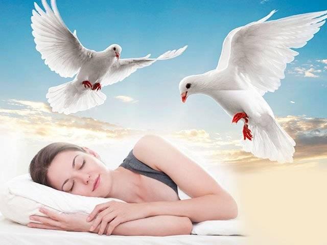 К чему снится белый голубь по соннику? видеть во сне белого голубя – толкование снов.