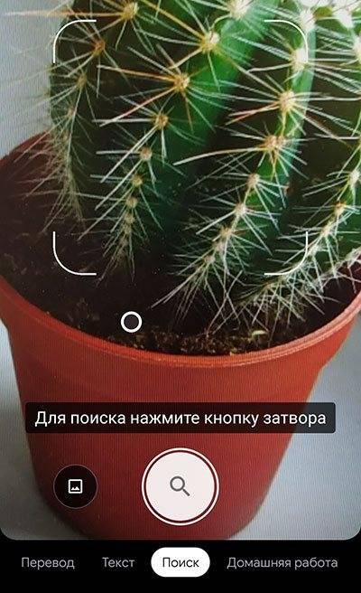 Примета, если зацвел кактус