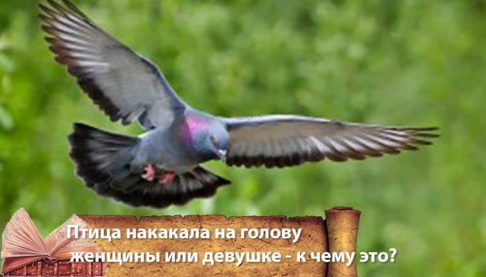 Проверенные приметы: к чему гадит птица