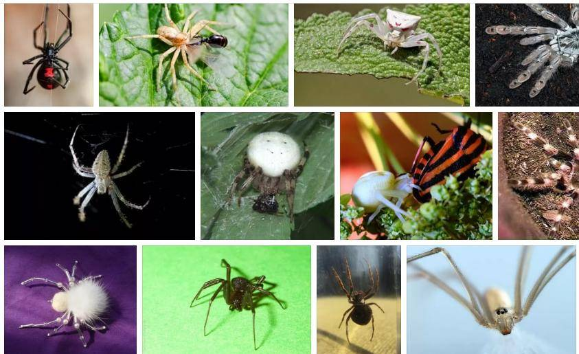 К чему снится паутина по соннику? видеть во сне паутину  - толкование снов.
