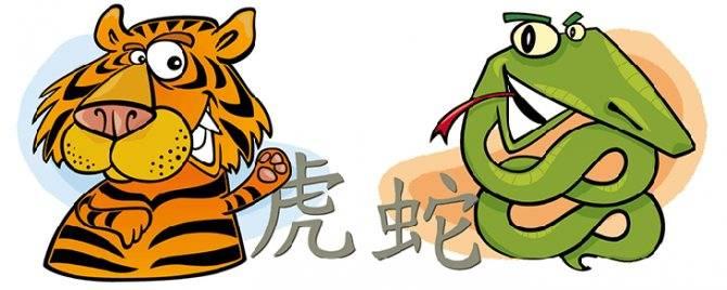 Совместимость змей и тигров в дружбе, работе и любви