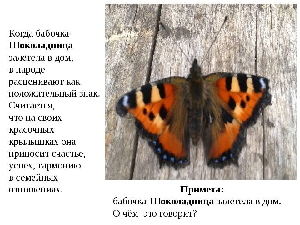 Бабочка залетела в дом: примета хорошая или плохая?