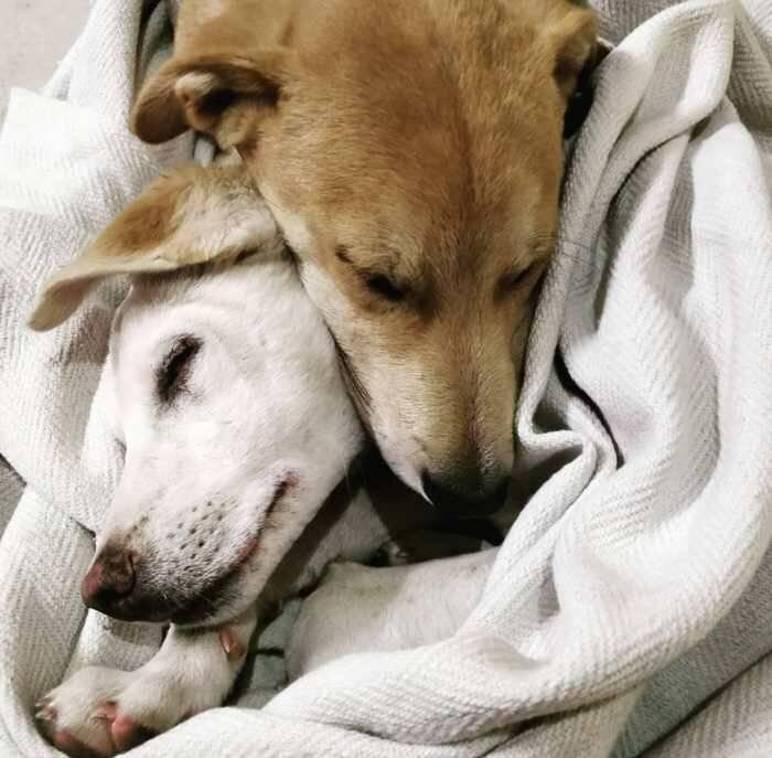 К чему снится белая собака: большая, маленькая, добрая, злая