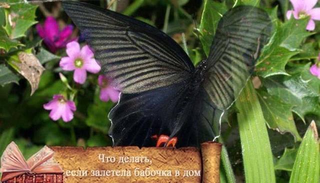 Приметы о бабочках: в квартире, доме, на окне – полный список толкований