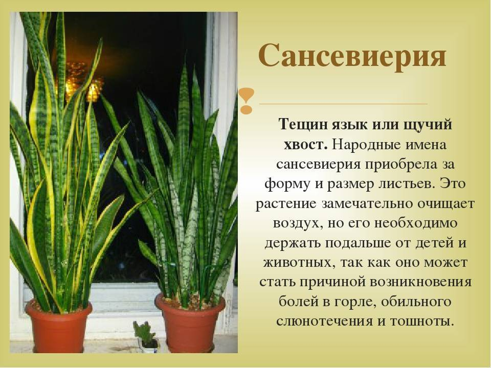 Цветок любви: комнатные растения, которые приносят в дом счастье - огород, сад, балкон - медиаплатформа миртесен