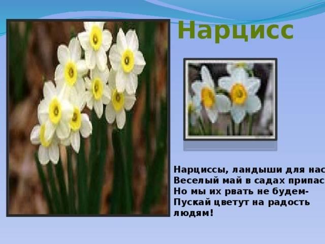 Легенды о цветах для детей. старинные поверья о цветах — символах весны весенние цветы легенды и поверья