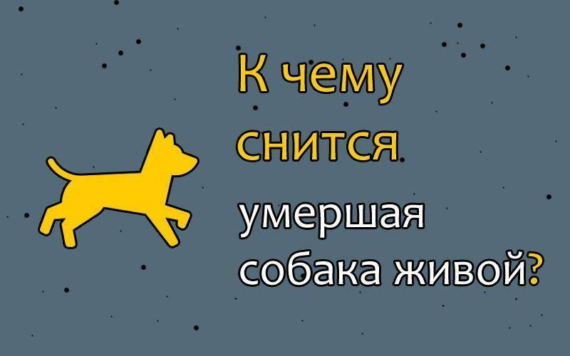 Сонник собака покусанная. к чему снится собака покусанная видеть во сне - сонник дома солнца