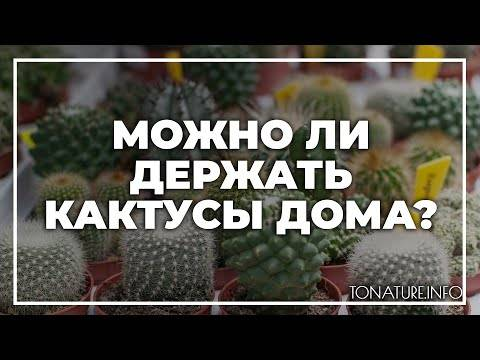 Почему нельзя держать дома кактусы. мифы и реальность selo.guru — интернет портал о сельском хозяйстве