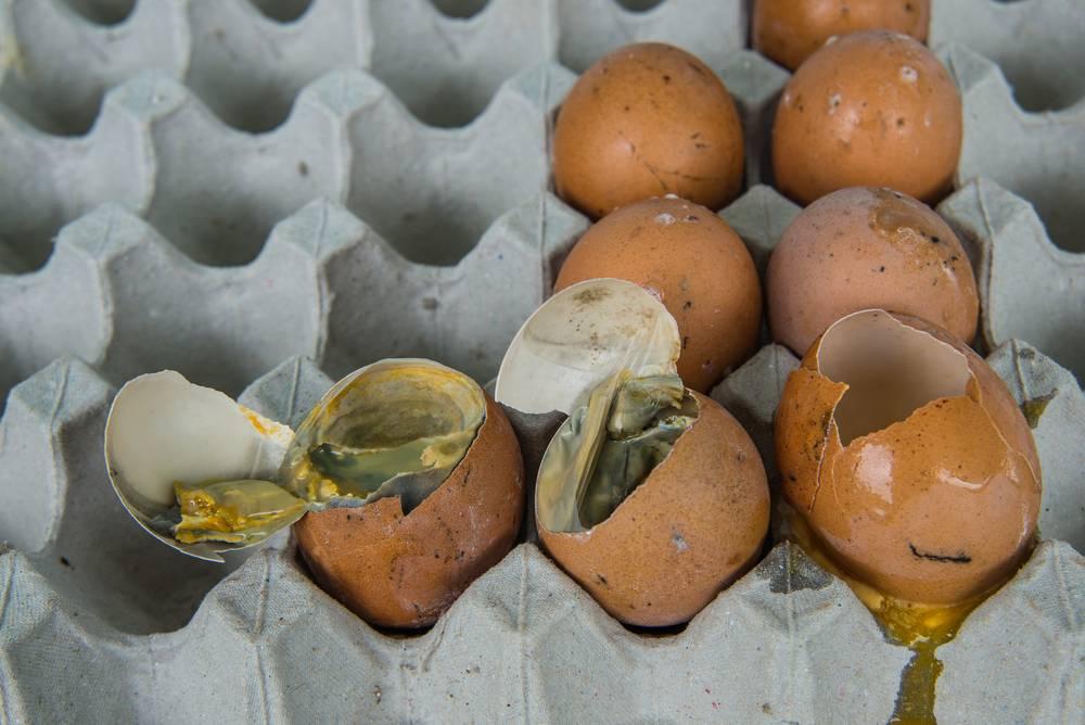 К чему снится много яиц женщине или мужчине - толкование сна по сонникам