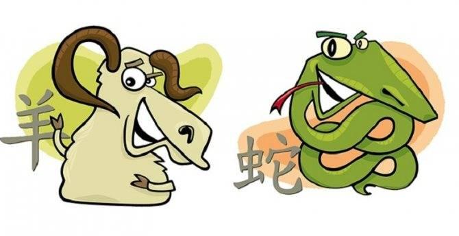 Змея и собака: совместимость в любви и отношениях для мужчины и женщины