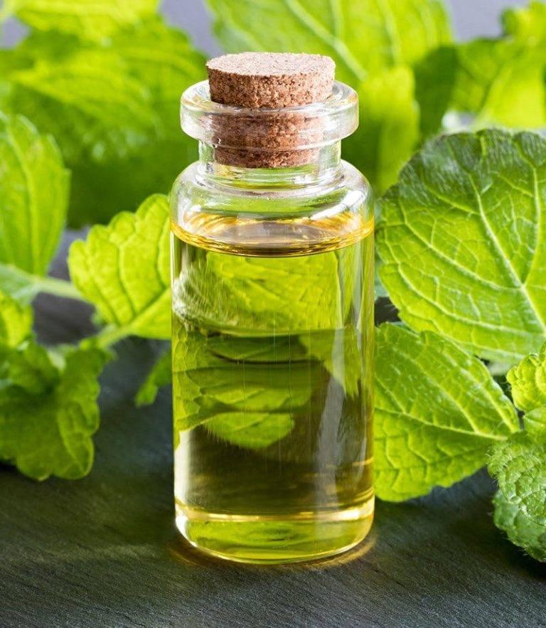 Духи с ароматом пачули: что это такое и как пахнет, список лучших парфюмов для мужчин и женщин