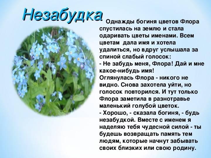 Тайны растений, истории цветов, мифы и легенды