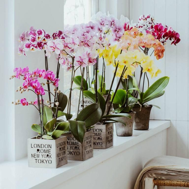 Цветы для суеверных – можно ли держать орхидею дома?