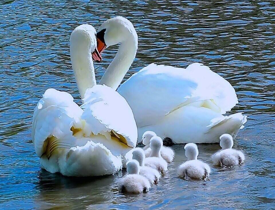 Семейные обереги: для дома, для благополучия, любви, счастья, от ссор как сделать своими руками сильные обереги для подарка и для себя