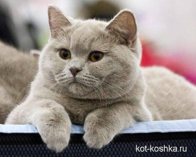 К чему снится серый котенок?