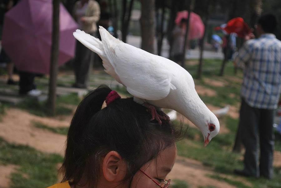 """Значение приметы """"птица накакала на одежду"""""""