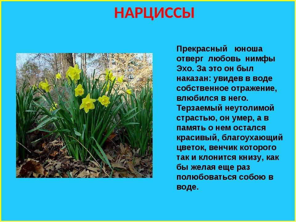 Легенды и истории о цветах! красиво и интересно. легенды о садовых цветах легенды о летних цветах
