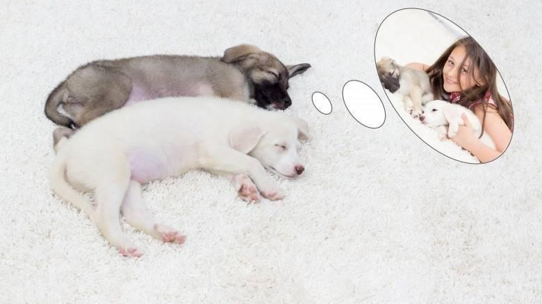 Собака в наших снах – толкование сновидений с собакой
