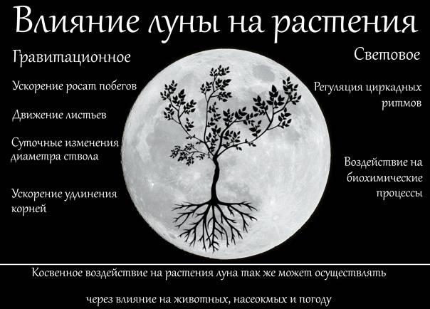 Влияние фазы луны на организм человека