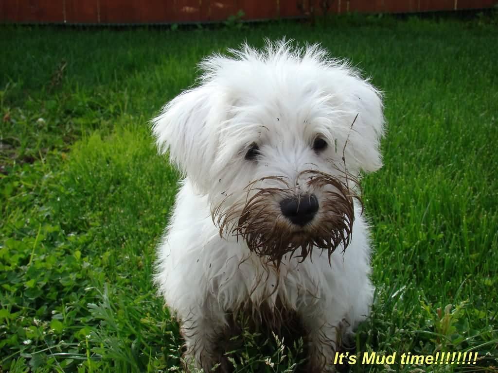 Сонник: белая собака к чему снится? :: syl.ru