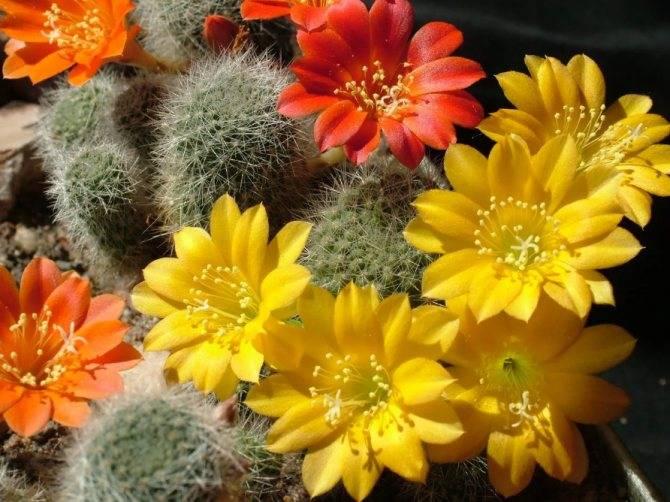 Как выбрать кактус: рекомендации по подбору растения