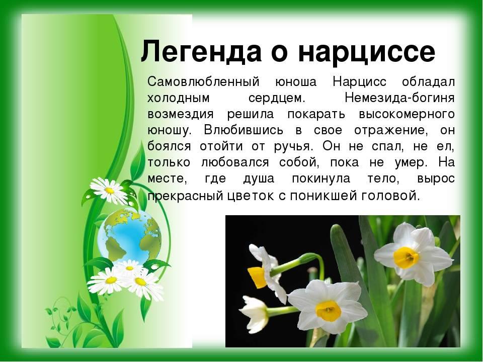 Растения осенних цветников: названия и фото, легенды и поверья :: syl.ru