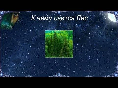 К чему снится лес - сонник и толкование. видеть лес во сне для женщины