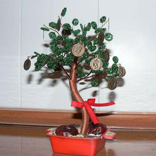 Денежное дерево – как правильно его посадить, чтобы велись деньги