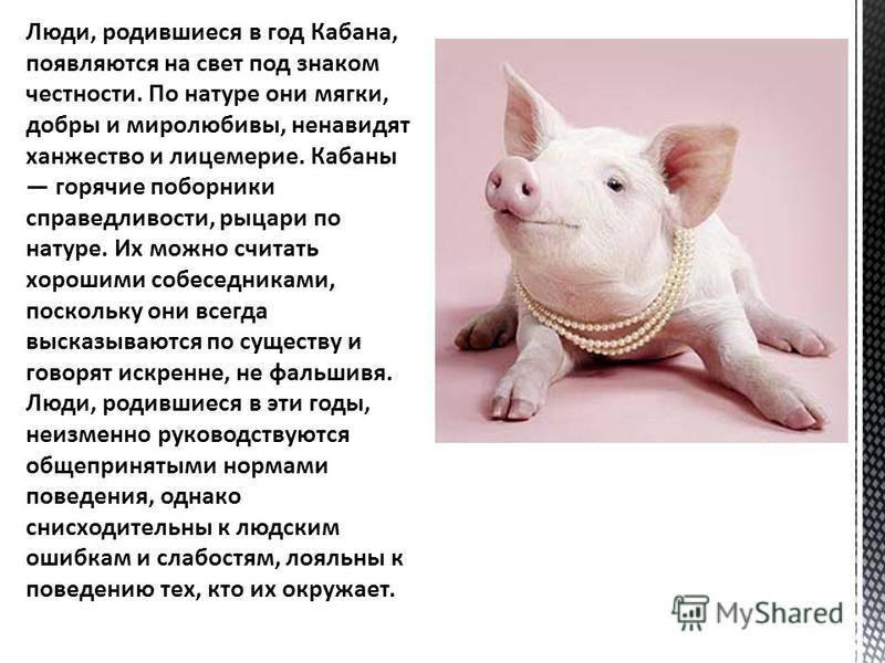 Год крысы: какие года? характеристика: 1960, 1972, 1984, 1996 и 2008 года