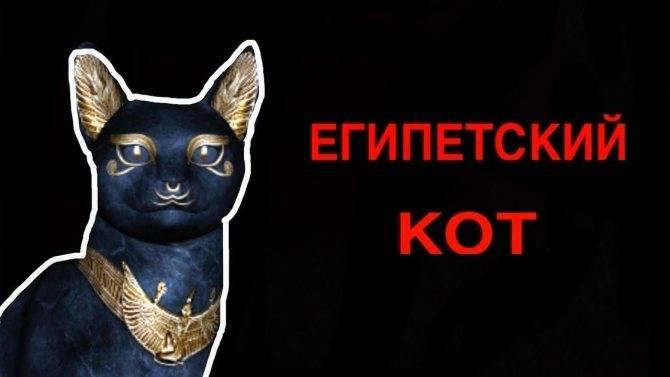 Существует ли египетский кот исполняющий желания
