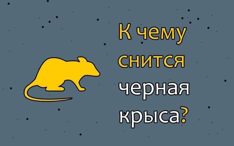 Убитая крыса во сне: к чему снится женщине, мужчине, девушке