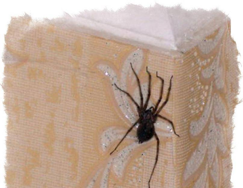 Почему нельзя убивать пауков? (мифы и наука)