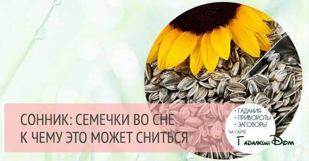 К чему снятся семечки подсолнуха ???? — топ толкований сна ???? по 50 сонникам: что означает для мужчины или женщины видеть, есть и покупать много черных жареных семян