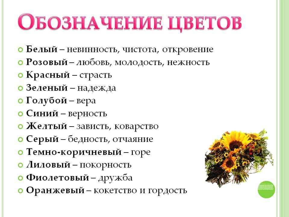 Сколько роз нужно дарить девушке и когда