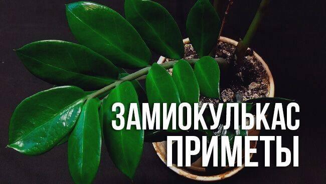 Зацвел кактус — примета и её толкование, где рекомендуется держать растение